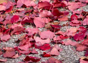 Fall seaon- photo pin