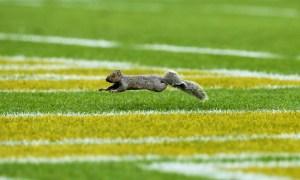 Indianapolis Colts v Green Bay Packers