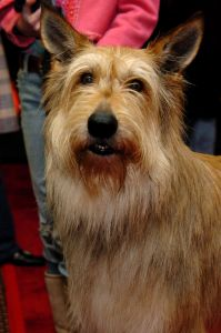 'Because of Winn-Dixie' New York City Screening and Paw Print Ceremony Hosted by 20th Century Fox