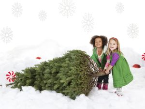 Two girls (18-23 months,4-5) pulling christmas tree